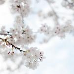 4月に騒乱が起きやすい理由とリラックス法