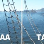【黒い砂漠】TAAとAdaptiveSharpenで最良画質を得る